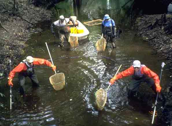 Photograph of Hydrologists taking water quality samples.